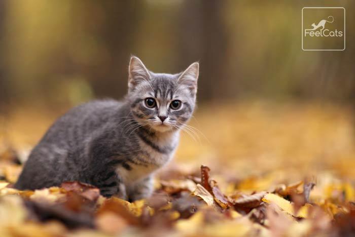 Stronghold-gatos-parasitos-externos-internos