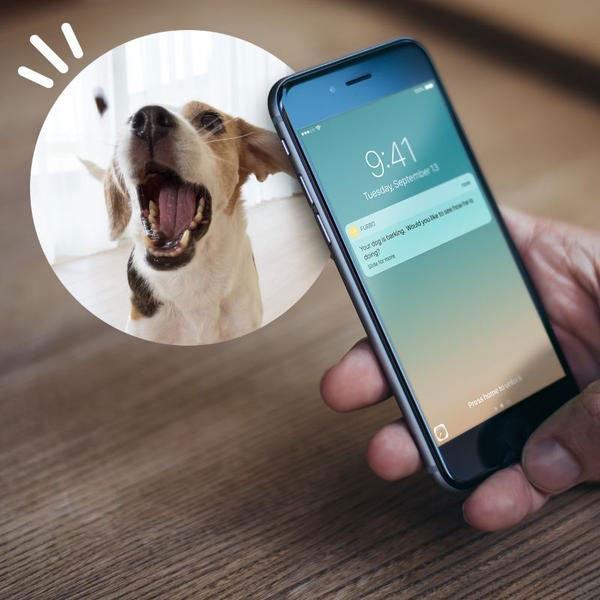 furbo-perro