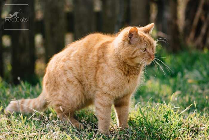 gato-naranja-caracter