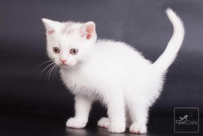 gato-blanco-bebe