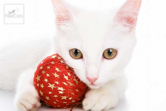 gato-blanco-cuidados-y-caracter