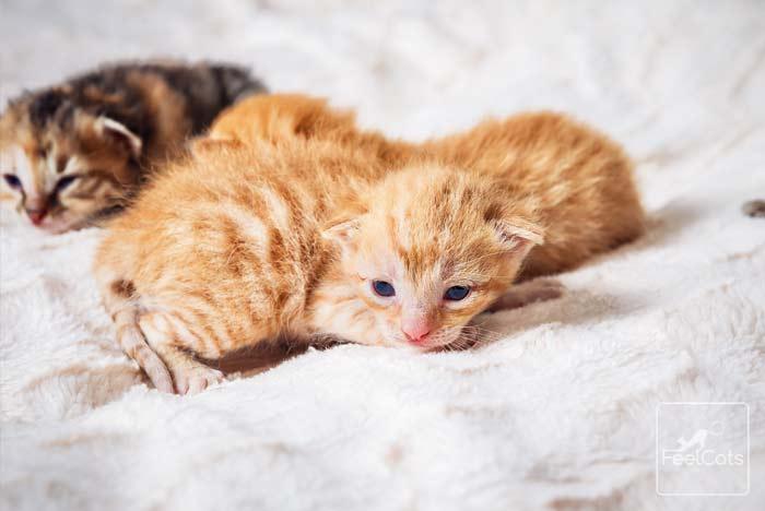gato-naranja-color