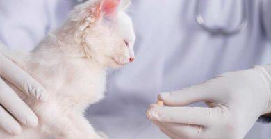 Milbemax para gatos