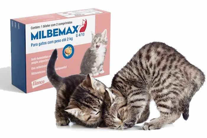 comprar-milbemax-gatos