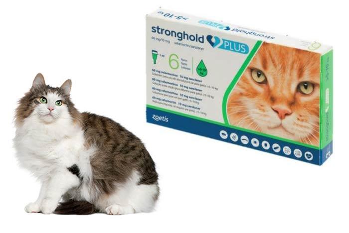 Stronghold-antiparasitario-gatos