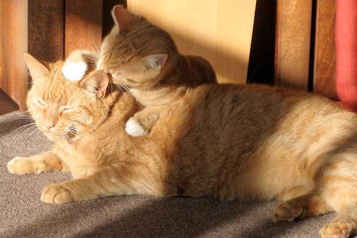 juntar-dos-gatos