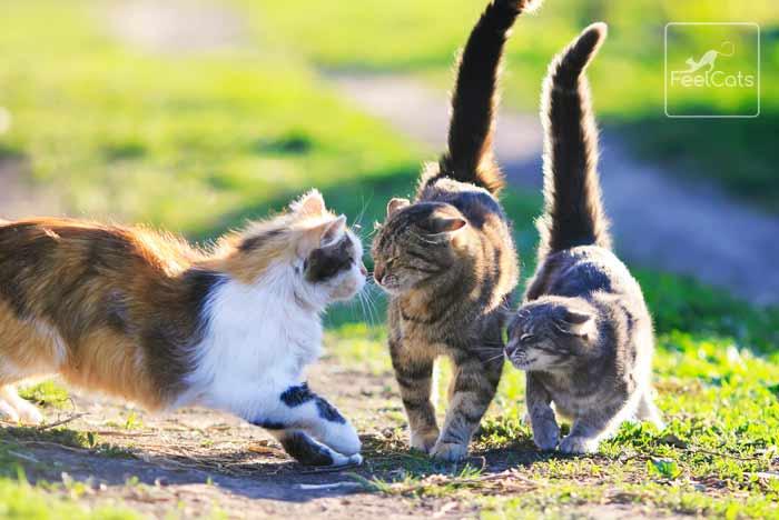 gatitos-colonia-asilvestrados