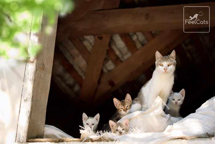 gatos-asilvestrado