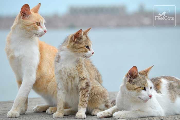 gatos-ferales-asilvestrados