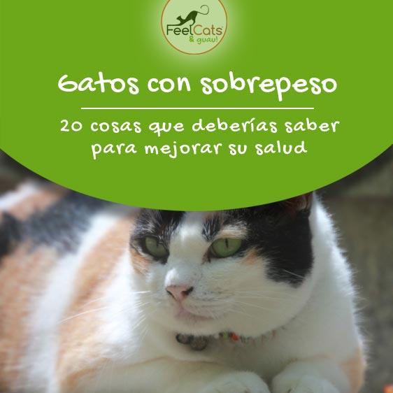 gato-gordo-obeso
