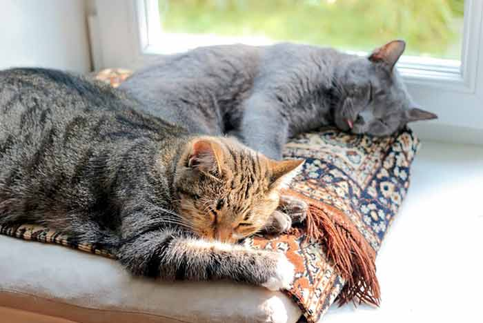 como-juntar-dos-gatos
