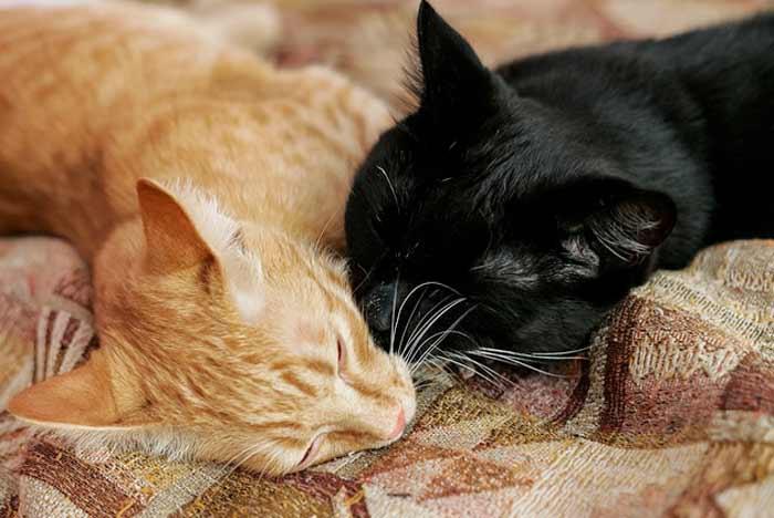 como-juntar-gatos-casa