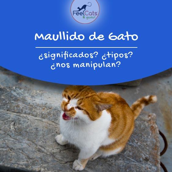 maullido-gatos-significados