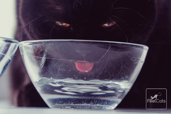 gato-bebe-mucha-agua