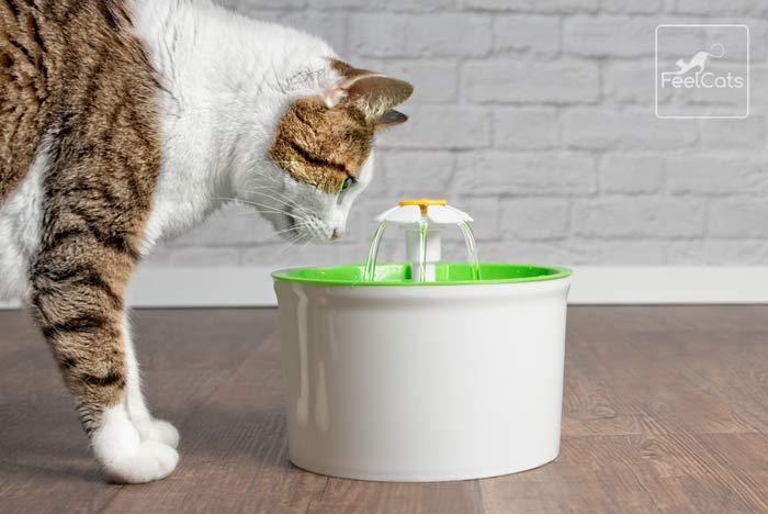 mi-gato-bebe-mucha-agua