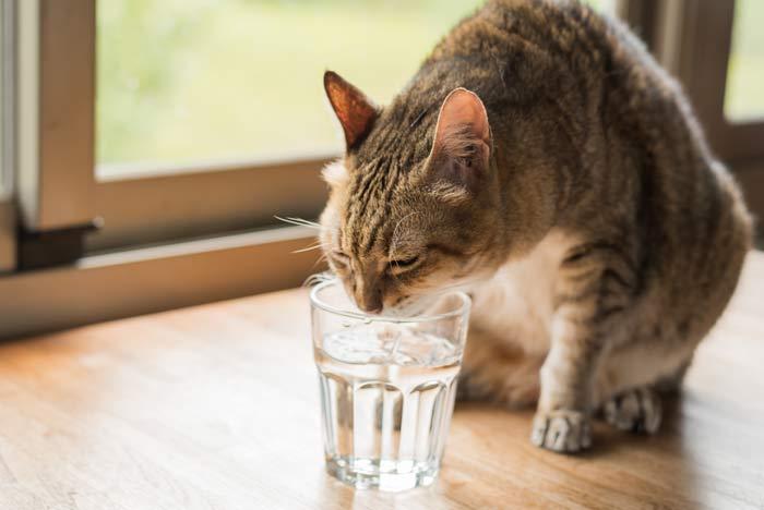 enfermedad no tener sed
