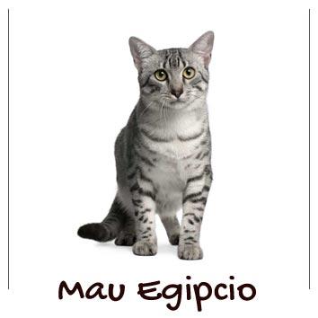 raza-gatos-mau-egipcio
