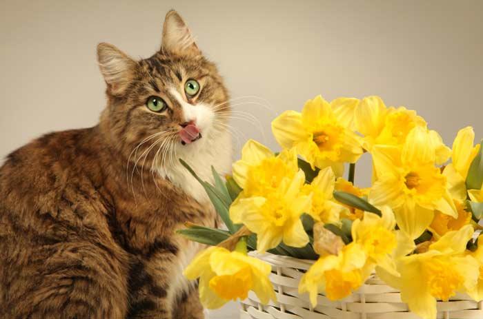gato-no-come-causas