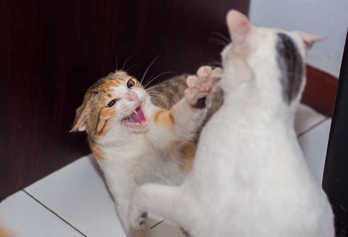 mi-gato-no-come-estres