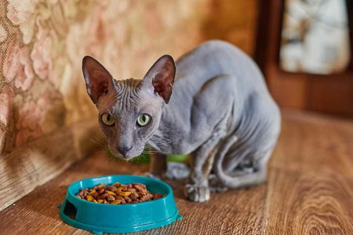 gato-no-quiere-comer-beber
