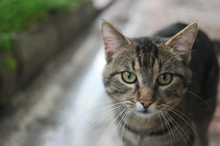 gato-no-quiere-comer
