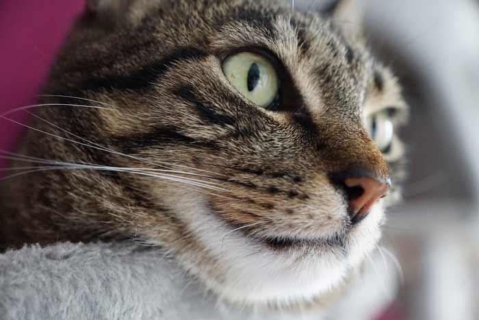 gato-triste-no-come