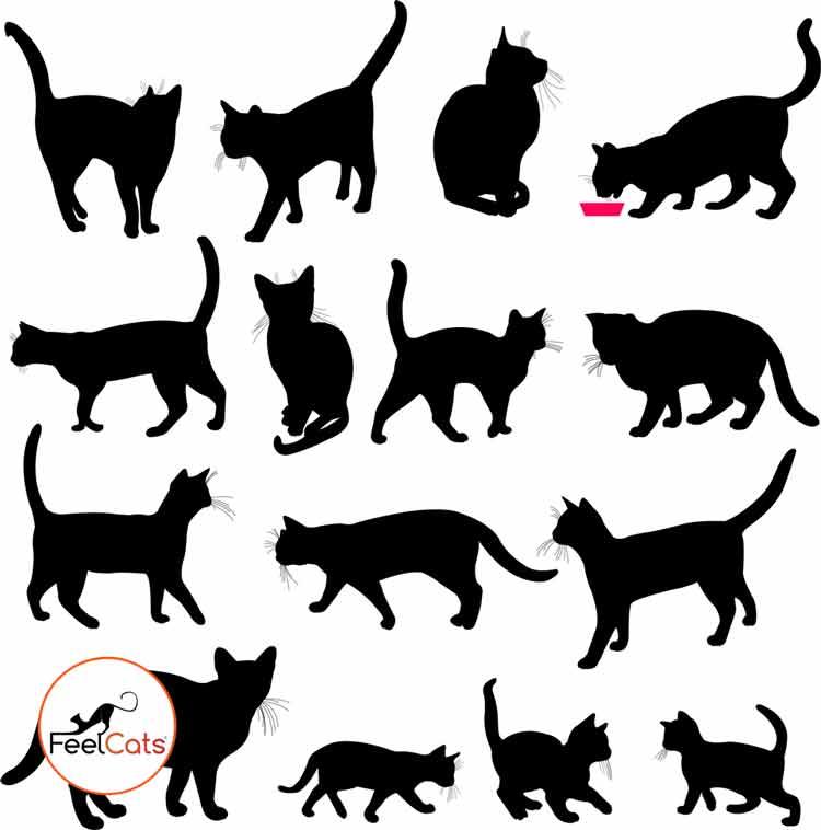 tatuajes-de-gatos negros-silueta
