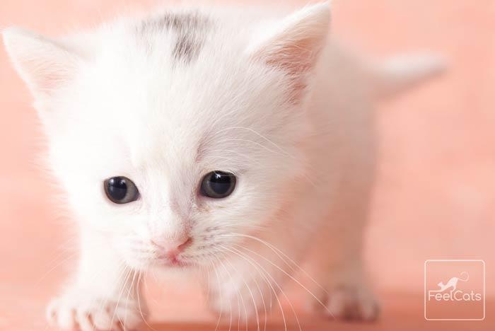 gatitos-bebe