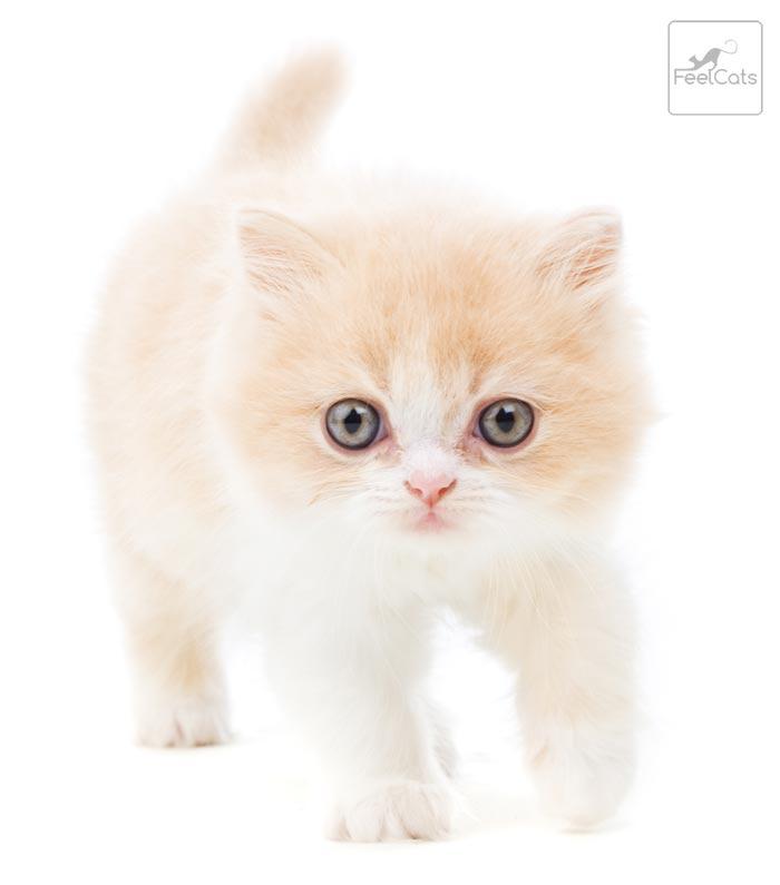 gatito-tierno