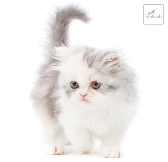 fotos-de-gatitos