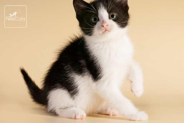 gatitos-adopción