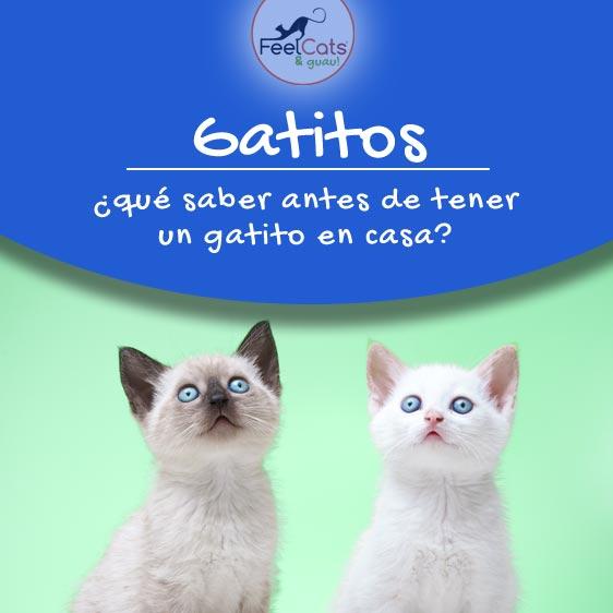 gatitos-cuidados