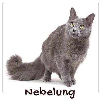 raza-gato-nebelung