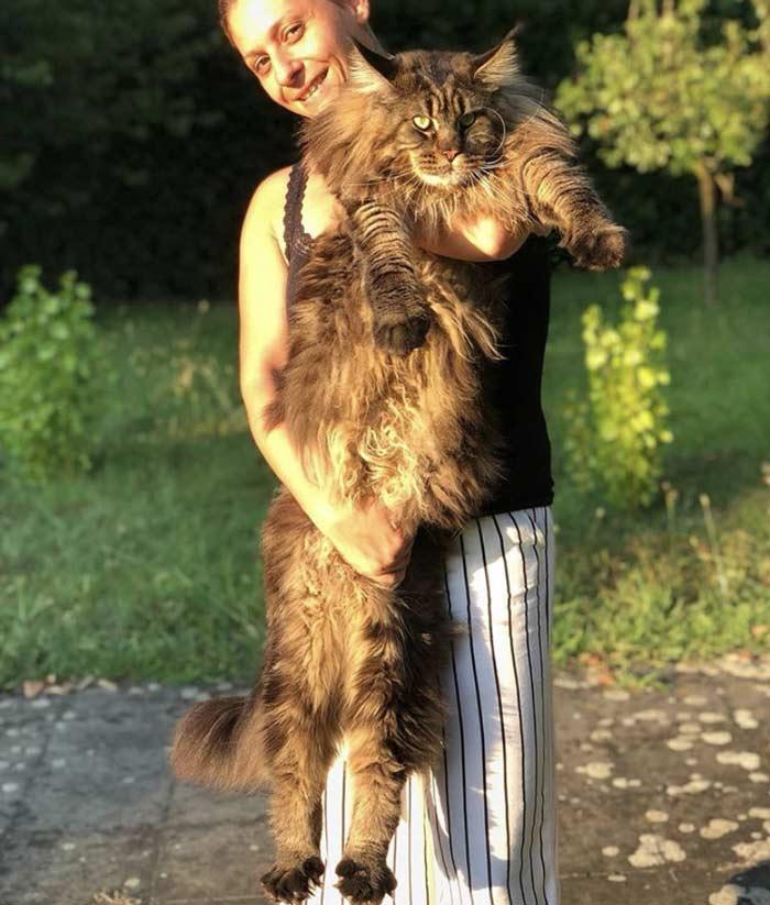 gato-mas-grande