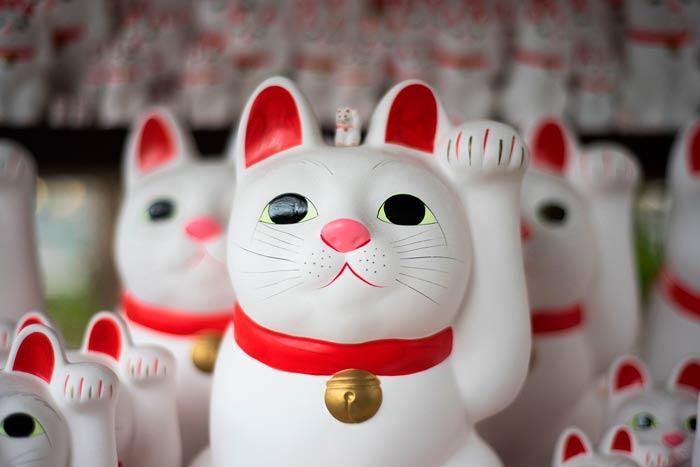 gato-chino-japones-suerte