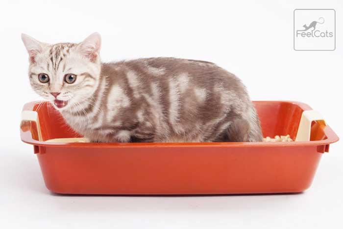 bebe-gato-estrenido