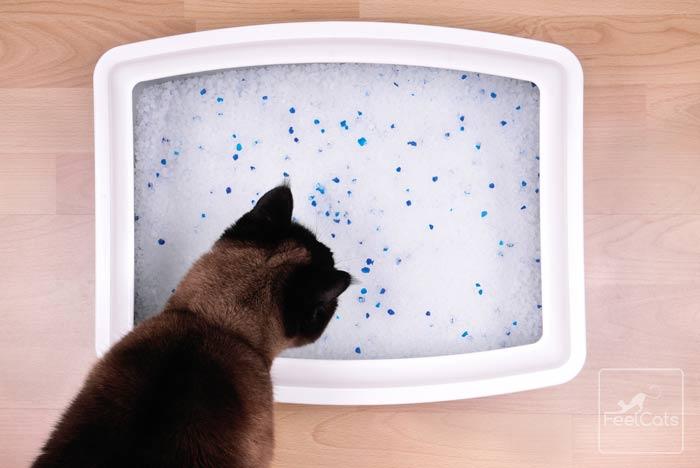 sintomas-estrenimiento-gatos