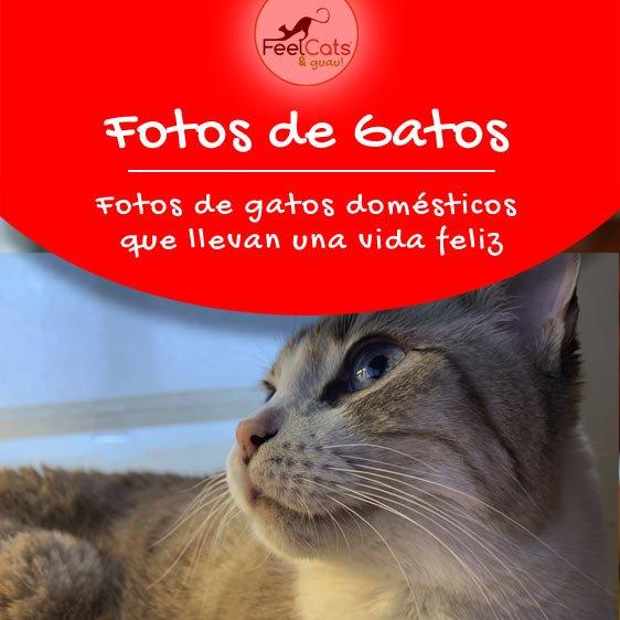 fotos-gatos