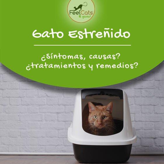 gato-estrenido