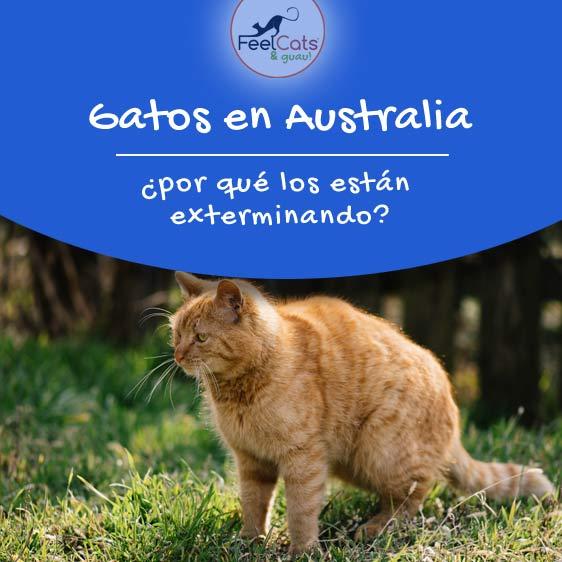 gatos-plaga-australia