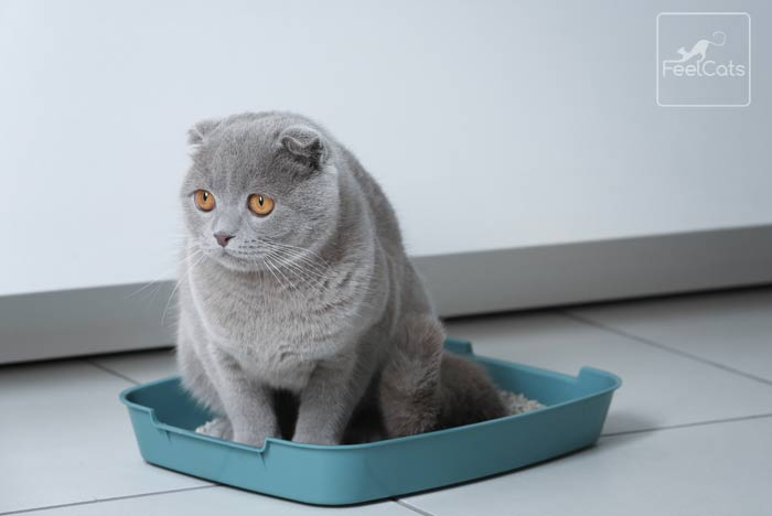gato-estrenido-sintomas