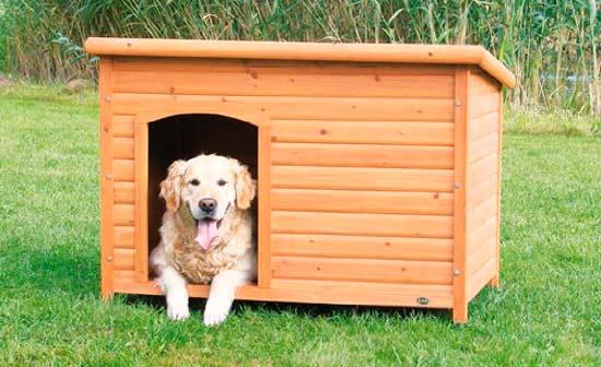 caseta de madera, para perro, con perro labrador dentro
