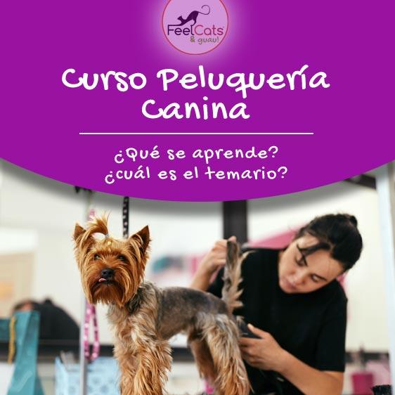 información sobre curso de peluquería canina