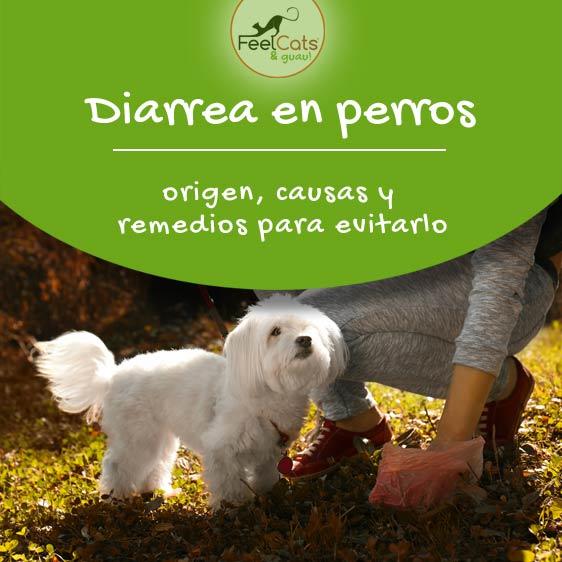 Diarrea en perros, causas, tratamiento e información