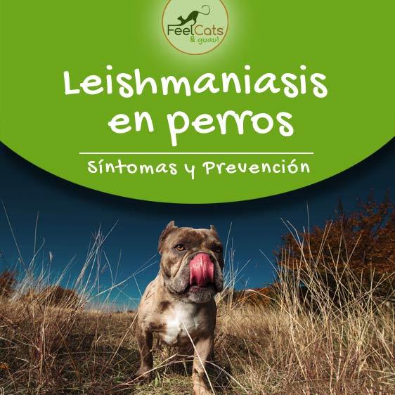 Leishmaniasis en perros. Prevención y síntomas.