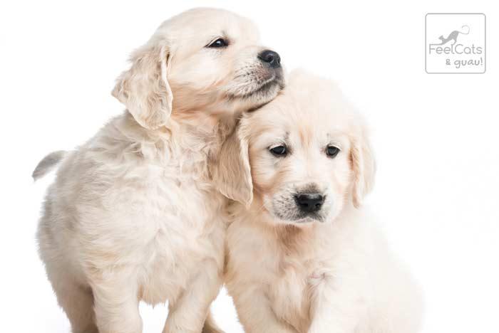 nombres famosos para perros