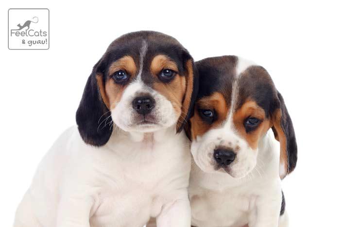 nombres para perros macho