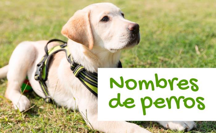 Nombres para Perros; Graciosos, Cariñosos, Machos, Hembras..