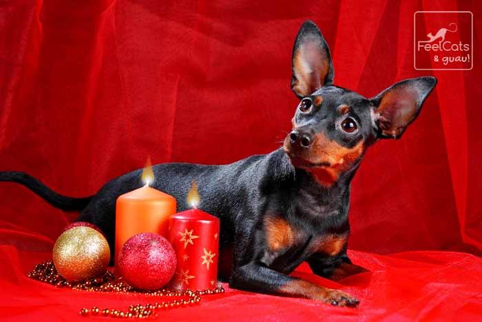 perro y la navidad