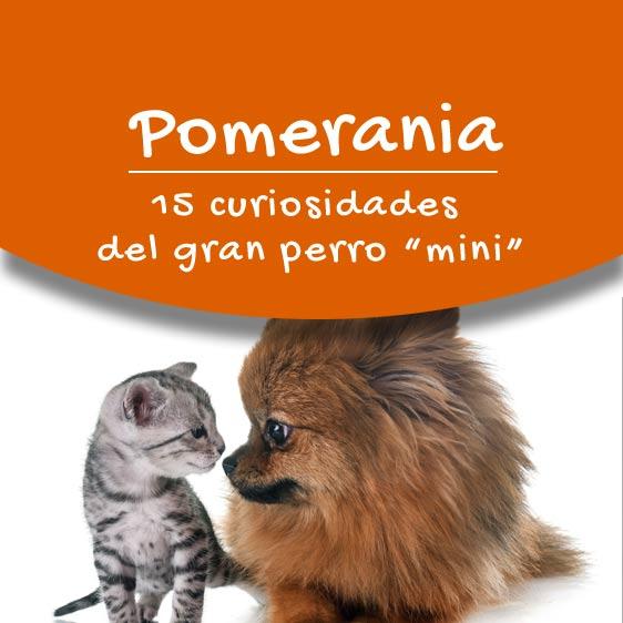 información sobre el perro pomerania